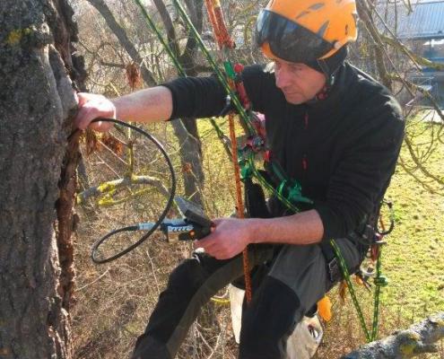 Baumhöhlenüberprüfung